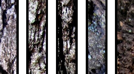 Tree Bark Textures