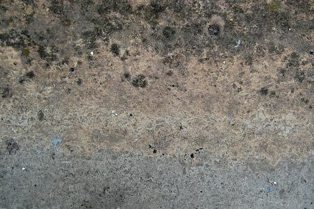 algal wall concrete texture