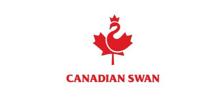 canadian swan