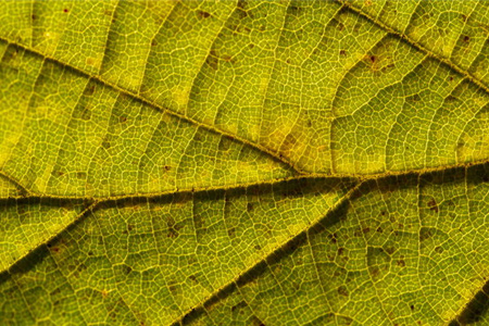 the texture of a leaf
