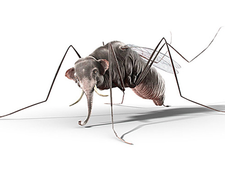 mosquito three