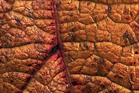 leaf_texture