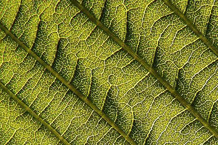 leaf's details