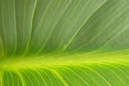 texture leaf 2