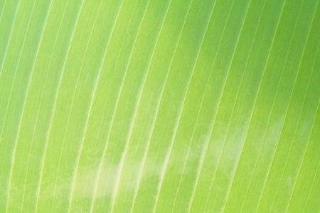 leaf texture 01