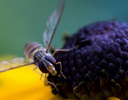 Wallpaper - Wasp Eyes