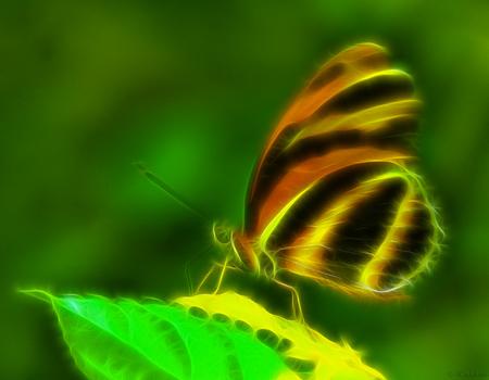 Luminous Lepidoptera (2560 x 1600)