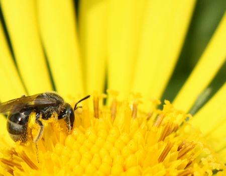 bee wallpaper 1680x1050