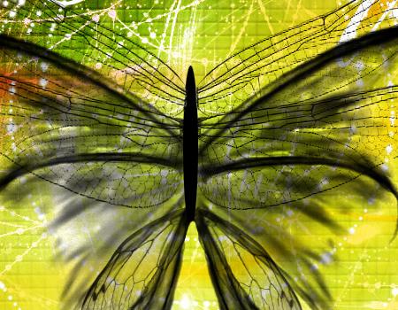 LSD butterfly