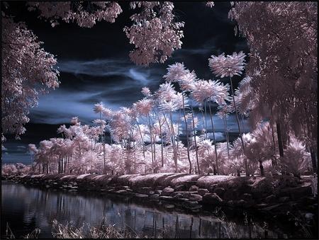 Tropical Garden Infrared