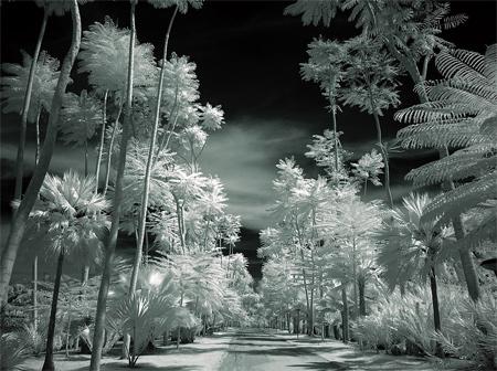 Tropical Garden II infrared