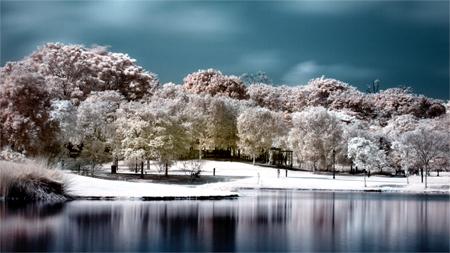 Infrared - Botanical Gardens 2