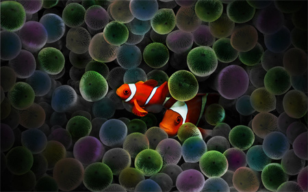 Circus Clown Fish Wallpaper