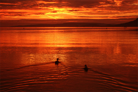 Sunset with Two Ducks
