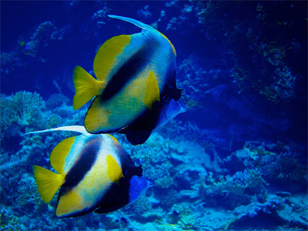 Marsa Alam Underwater Close Up Wallpaper