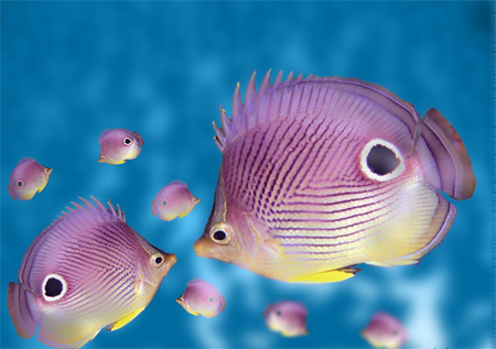 SuperPurple Fish Wallpaper