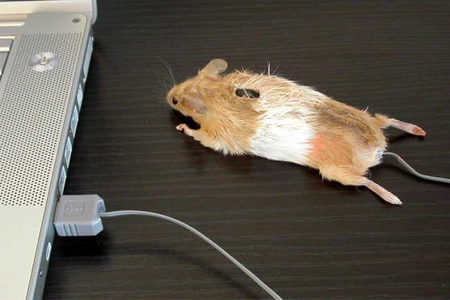 Mouse Mouse!