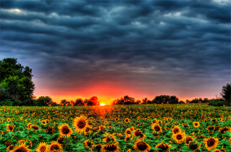 The Sun and It's Flowers - HDR