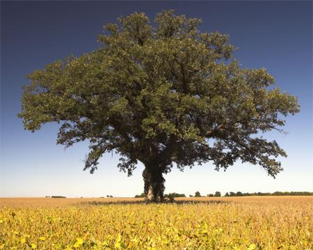 The Tree 42