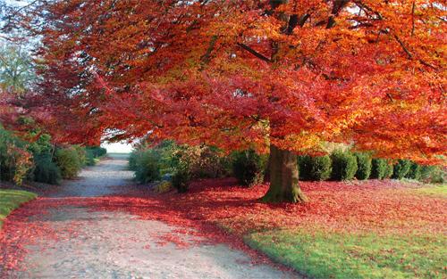 30 Absolutely Spectacular Autumn Wallpaper For Your Desktop Blueblots Com
