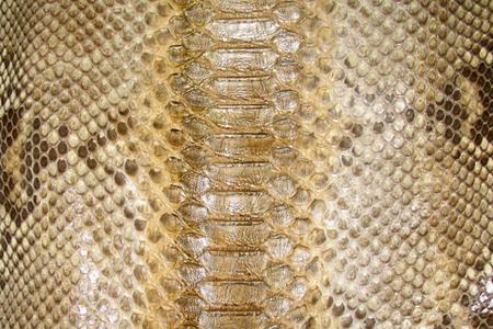 Exotic Gold Reptile