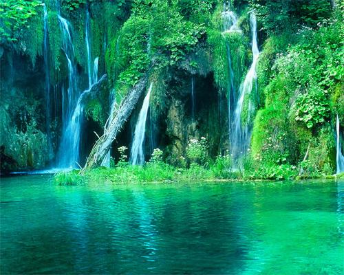 Rainforest Paradise