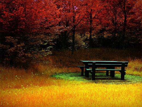 Fire Autumn