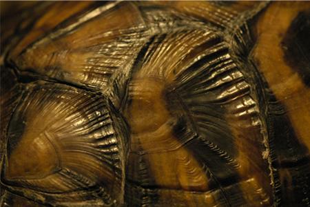 Texture I - shell