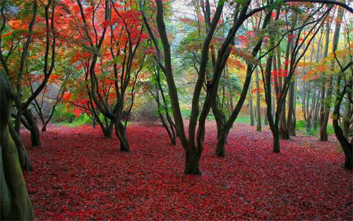 Autumn Desktop Background