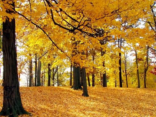 Peaceful Autumn Yellow