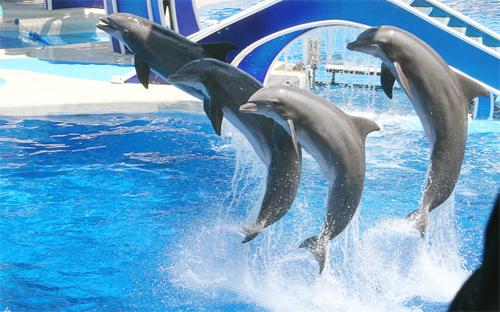 Sea World: Dolphin.3
