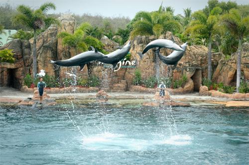 Dolphin Jump 3
