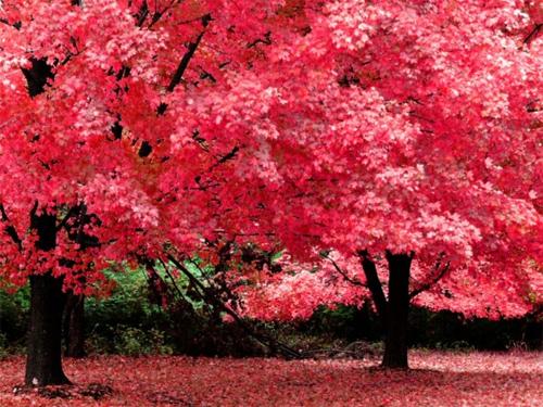 Autumn In Pink