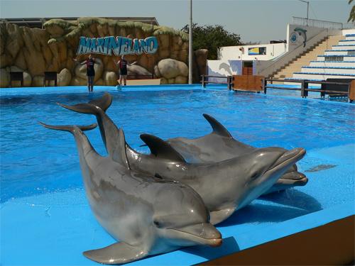 dolphin 11