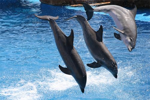 Dolphin Three