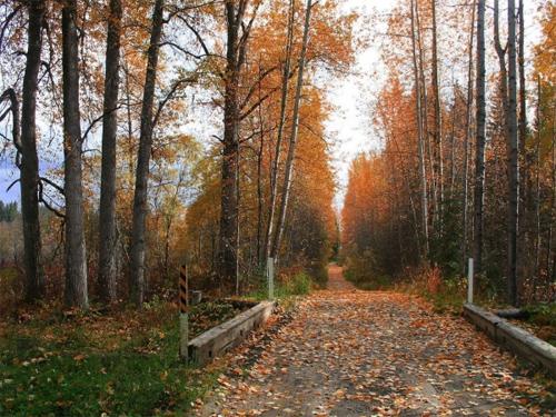 Beautiful Autumn By Cannabian
