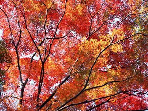 autumn wallpapers 1