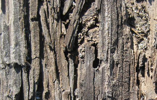 Wooden Decline