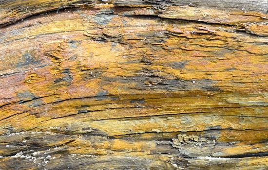 Driftwood Tex