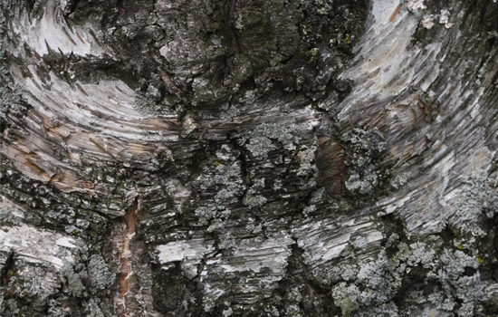 Wood Texture 2