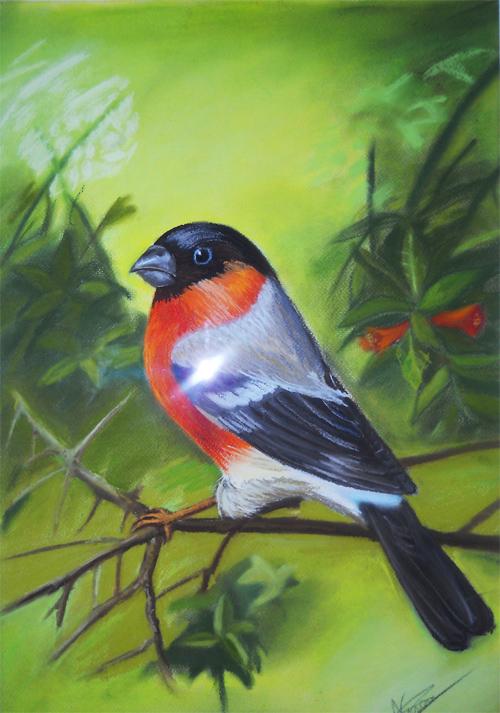 bird in pastel