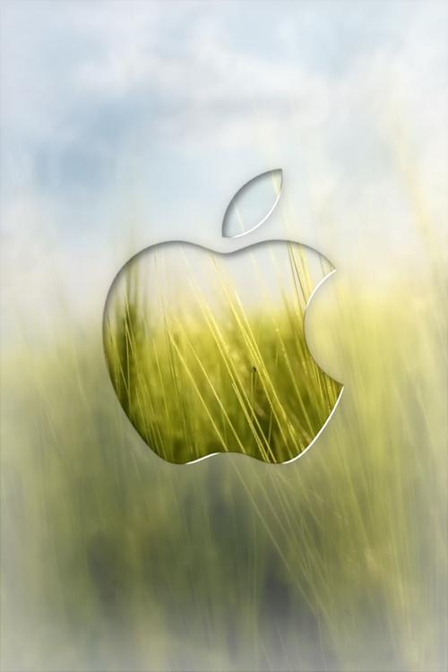 Apple Wheat Field